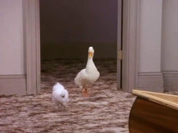 Chicknduck