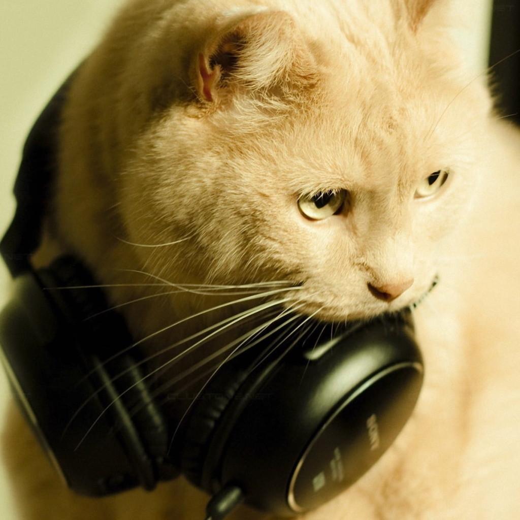 cat-face-earphones-funky-wallpaper