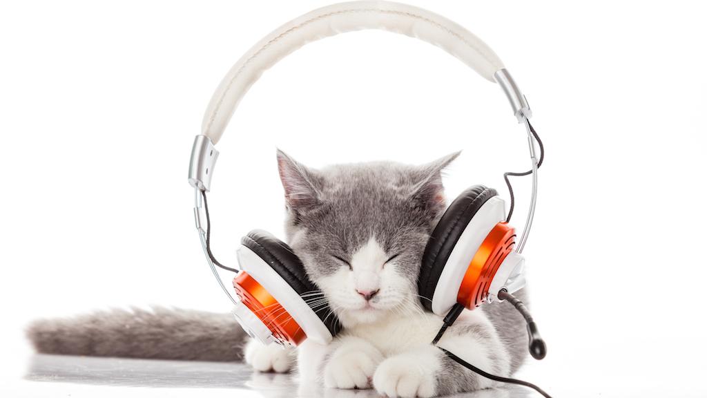 Cute kitten and headphones.
