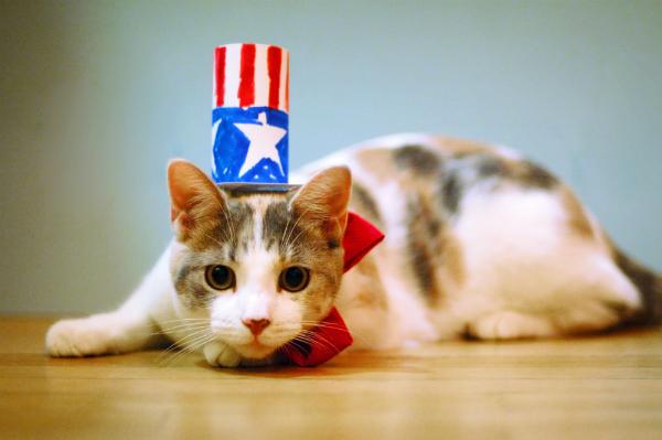 600px-unhappy-cat-in-patriotic-costume
